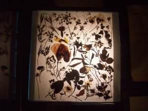 Pressed flowers, 1917